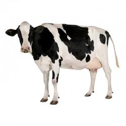 Pienso ecológico vacas producción
