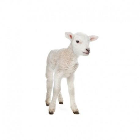 Pienso ecológico corderos 15-21 kg