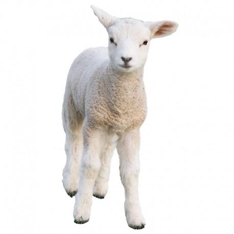 Pienso ecológico corderos 22-26 kg