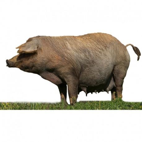 Pienso ecológico gestación cerdos