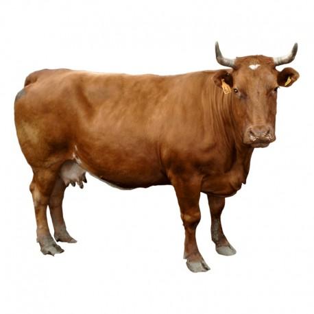 Pienso ecológico vacas mantenimiento