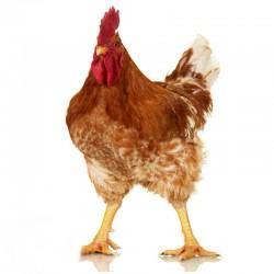 Pienso ecológico pollos